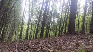 Nature Sounds Forest Sounds Birds Sound