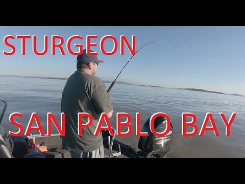 Sturgeon Fishing *Solo Trip* - San Pablo Bay, SF Bay Area