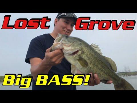 lost-grove!!-b2b-showdown