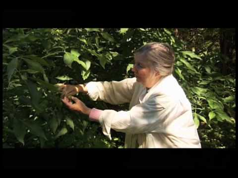 Diana Beresford-Kroeger, author of The Global Forest - YouTube