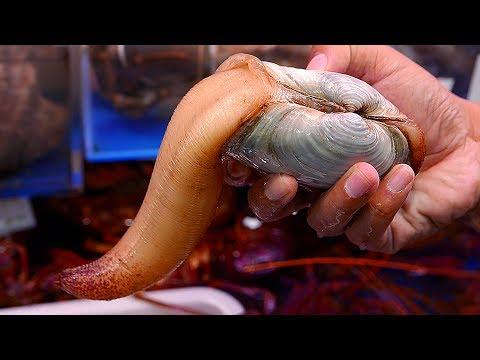 Japanese Street Food - GEODUCK SASHIMI Seafood Japan