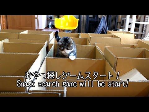 たくさんの段ボール箱とねこ。-Many boxes and Maru&Hana.-