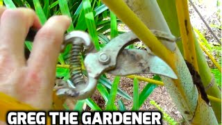 HOW TO PRUNE A PALM TREE - Greg The Gardener