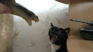 Приколы с животными: Кошка и игрушечная змея. Cat and toy snake.