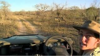 Sept 14 WildEarth Safari PM drive thumbnail