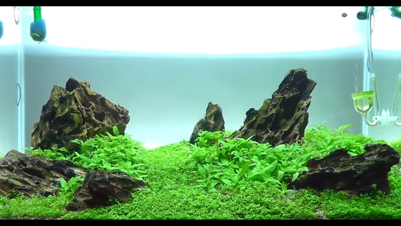 Delightful Aquascape Iwagumi Style   Trimming   16th Week Update [HD]   YouTube
