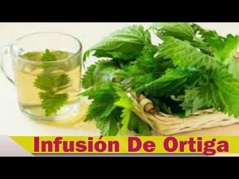 Infusión De Ortiga: Beneficios De La Infusion De Ortiga
