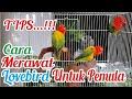 Tips Cara Merawat Lovebird Untuk Pemula Kicau Q  Mp3 - Mp4 Download