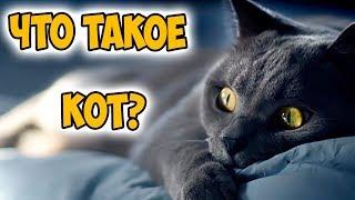 Что такое кот?