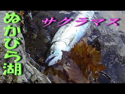 人生初 1投目でヒット!! ★糠平湖のサクラマス釣り★ マス族の中で一番カッコイイのがサクラマス Hokkaido Japan Trouto Lure Fishingu