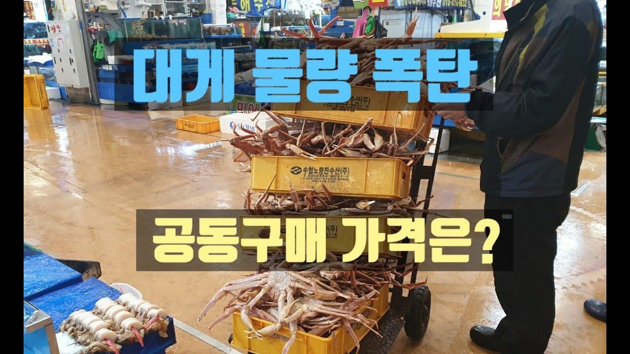 노량진수산시장 대게 물량폭탄 공동구매 가격?