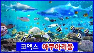 예쁜 물고기 가득한 코엑스 아쿠아리움