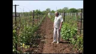Секреты виноградарства (зелёная обрезка)(, 2012-05-23T19:19:56.000Z)