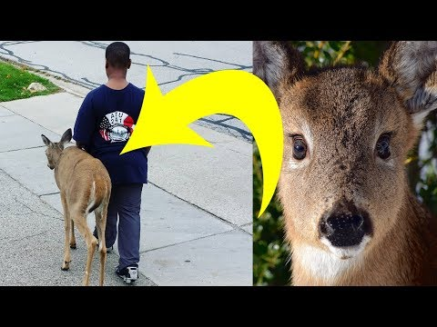 Neighbors Noticed That This Boy Walked A Deer Every Day. Then They Looked At The Animals Eyes