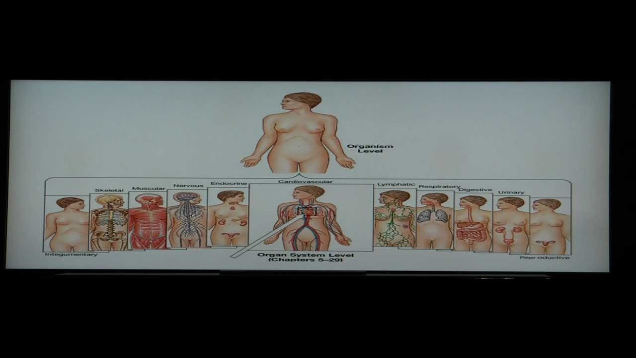 Anatomy And Physiology Help Chapter 1 Segment 1 Characteristics Of
