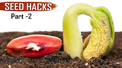 GARDEN TIPS & Hacks: TOP 25 Seeds & Seedlings Gardening Hacks DIY Ideas tricks Compilation - Part 2