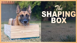 How to use the Shaping Box to Sharpen up your Sit, Down, Stand, Sitfront, and Heel Position.