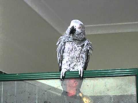 alex parrot 2