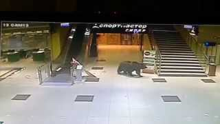 Медведь ворвался в торговый центр в Хабаровске / The bear broke into a shopping center in Russia