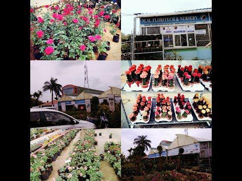 Plants Haul  Gardening lovers  Bangalore Plants Nursery visit