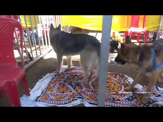 KRISHI MELA 2018 DOG SHOW ???? DHARWAD