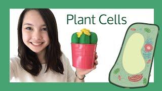 Plant Cells - Explanation