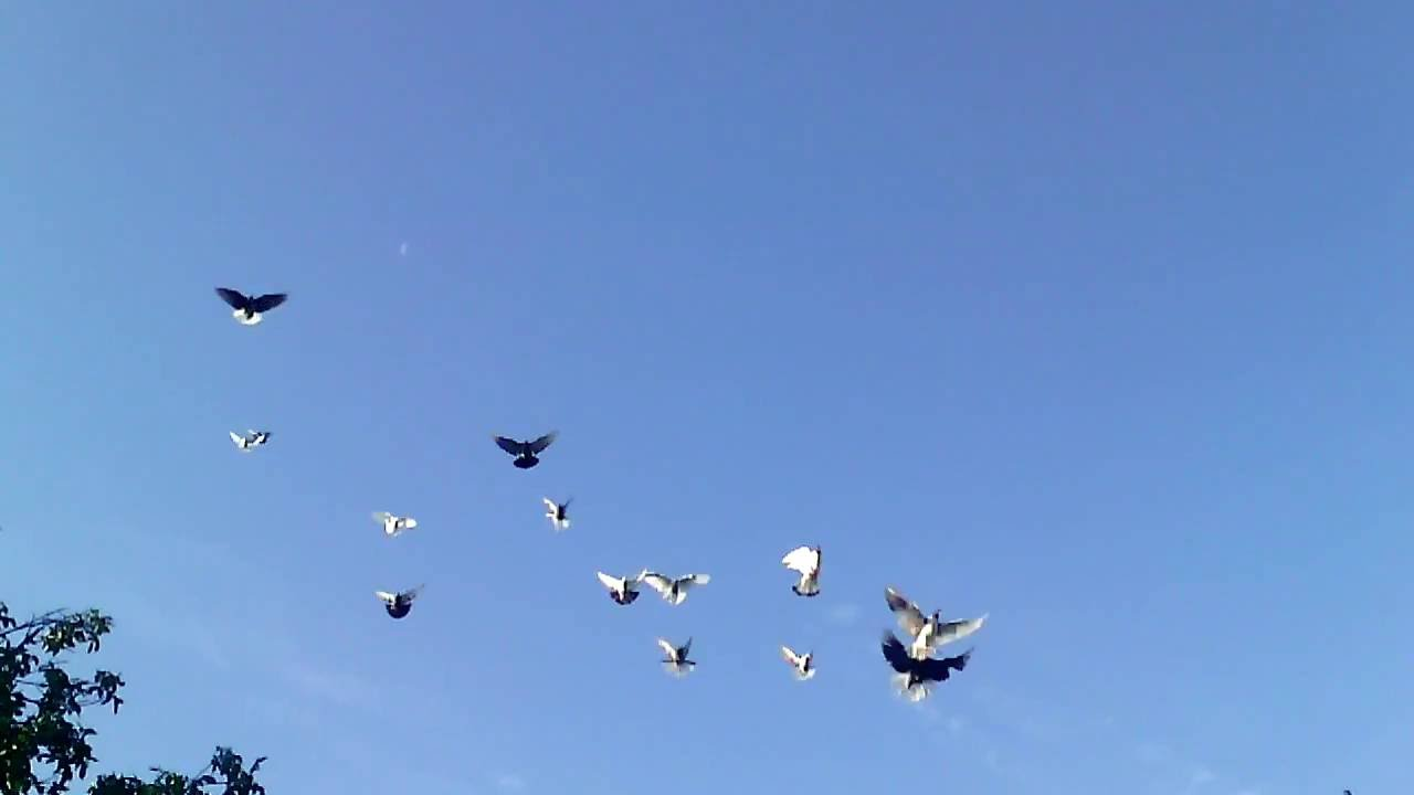 николаевские голуби ютуб таком советских