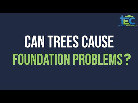 Can Trees Affect Home Foundation - Foundation Engineer Dallas Fort Worth Arlington