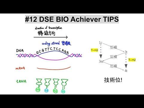 #12 DSE BIO TIPS 推斷鹼基序列及氨基酸序列 deduce the base sequence aminio acid sequence - YouTube