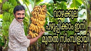 Banana Ripening | H๐w to Ripen Banana at Home