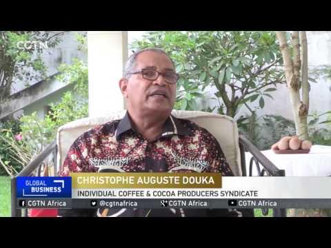 Chocolate love spurring cocoa farming