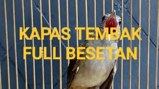 Gambar cover Kapas tembak gacor full besetan cocok untuk #masteran burung #muraibatu #cucakijo #kacer dll