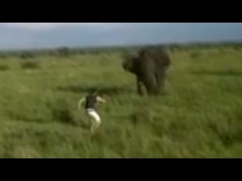 Man Charges Elephant, Loses Job