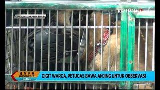 Gigit Warga, Petugas Bawa Anjing Bima Aryo untuk Observasi