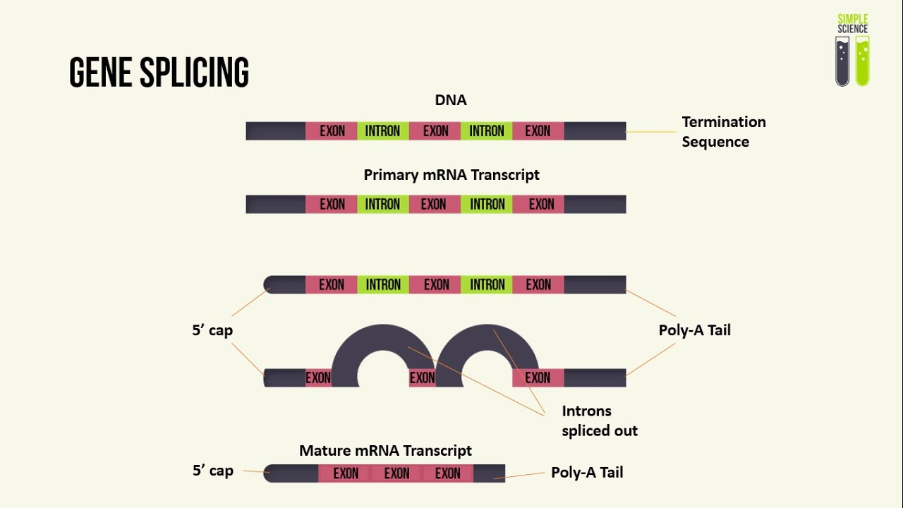 gene splicing pros and cons