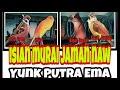 Masteran Murai Kacer Gereja Tarung Kenari Kapas Tembak Cucak Jenggot  Mp3 - Mp4 Download