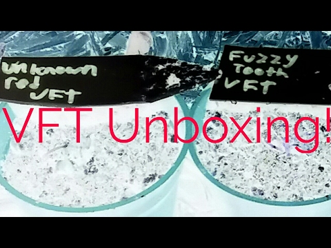 unboxing-and-planting-venus-fly-traps.