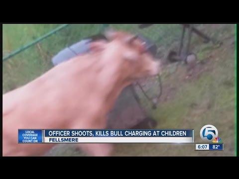 Police shoot bull that chased children