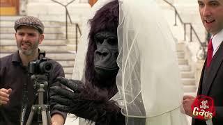 Đùa Chút Thôi Nước Ngoài Siêu Hài Hước   Part 21 Bridezilla No, just Gorilla Bride