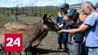 Наводнение в Приморье: отряды МЧС помогают не только людям, но и животным