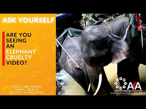 ASK YOURSELF - is there elephant cruelty behind the scenes?