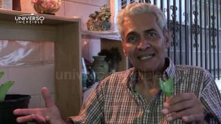 Se curó de cáncer comiendo hojas de la planta Kalanchoe