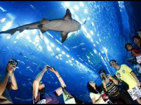 Big Aquarium In Dubai Mall The Largest Aquarium In The