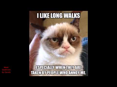 Best of Grumpy Cat 2014 || HAPPY NEW YEAR!!