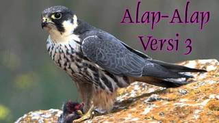 Download lagu DOWNLOAD SUARA MASTERAN BURUNG ALAP-ALAP VERSI 3 FULL HD