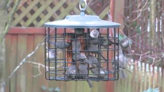 Squirrel Proof Suet Birdfeeder - Jan. 2014
