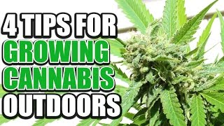 4 Fundamental Tips For Growing Cannabis Outdoors - Cannabis Lifestyle TV