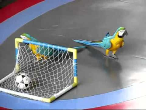Download Parrot show in China mp4   YouTube