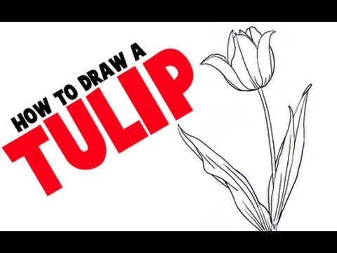 how to draw a tulip step by step flower tutorial youtube