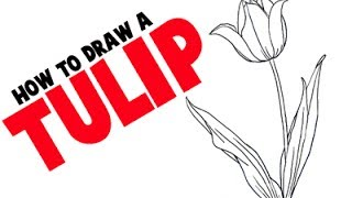 How to Draw A Tulip Step by Step Flower Tutorial.